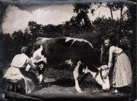 Tehénfejés. Ismeretlen művész szociofotója az 1930-as évekből. | 4 ...